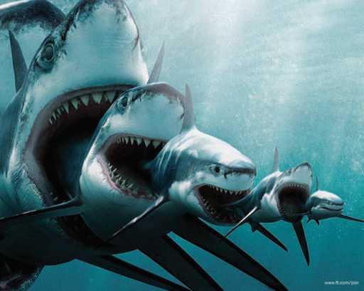Requins%20gigogne.jpg